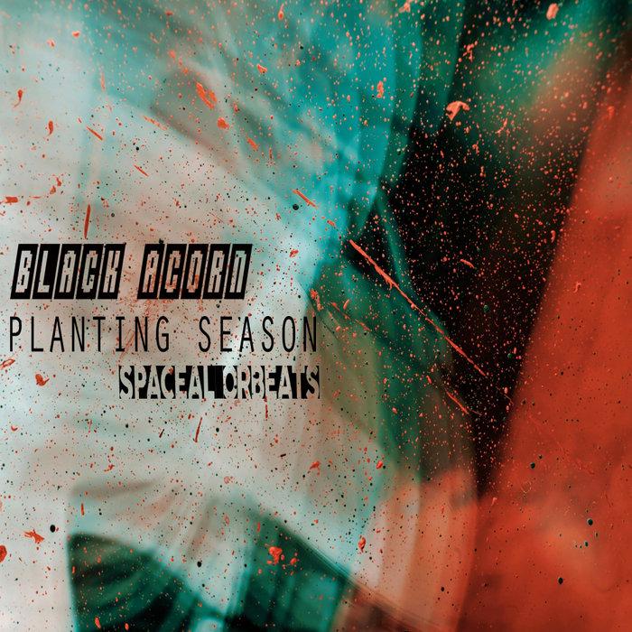 BLACK ACORN - Planting Season