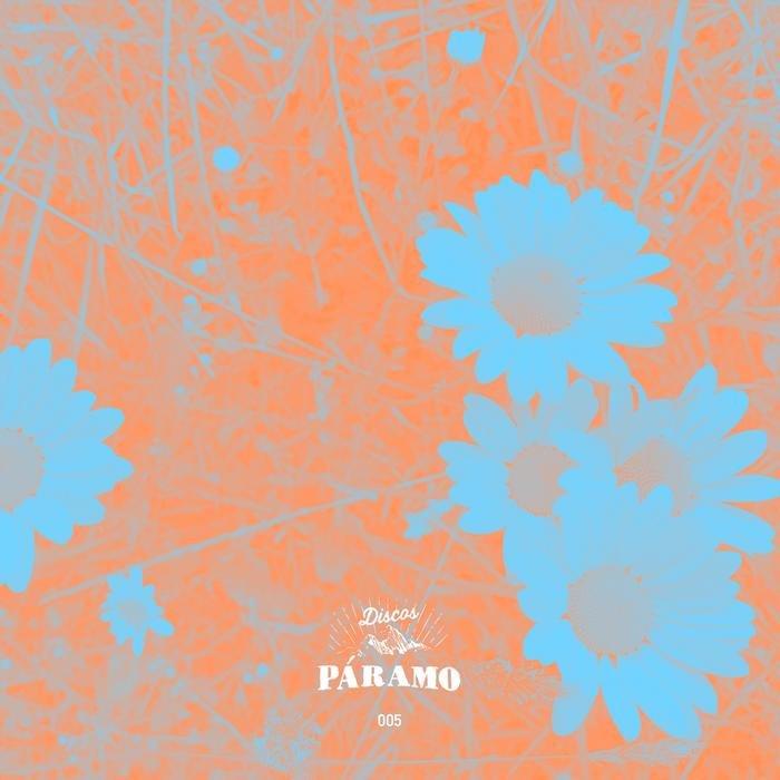 JULIAN GOMEZ - 005 Paramo Flowers