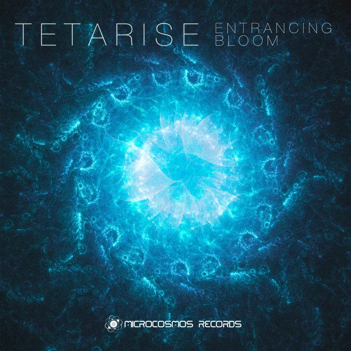 TETARISE - Entrancing Bloom