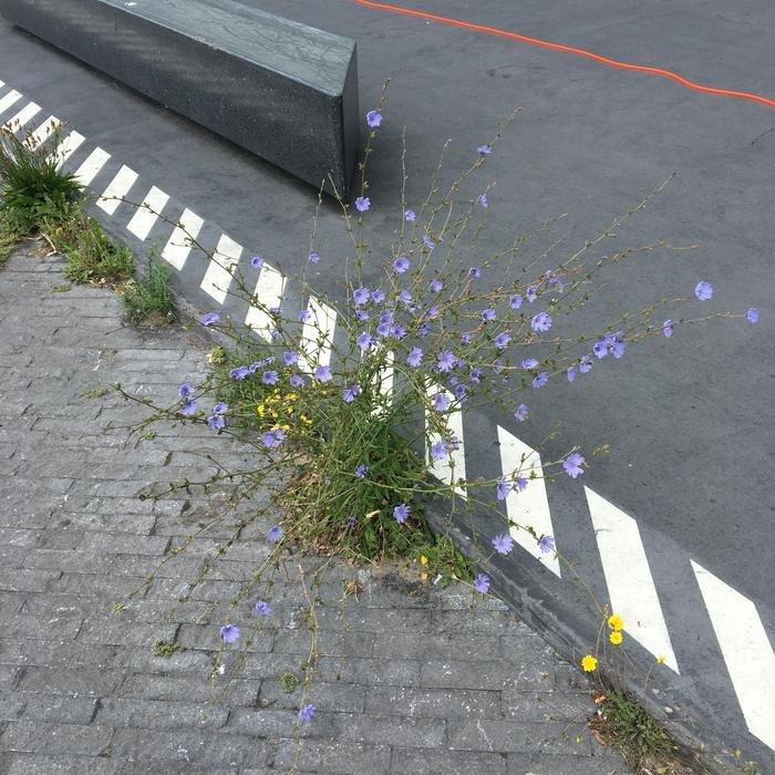 UPSAMMY - Bend